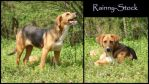 Doggy-STOCK by Rainny-Stock