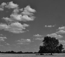 Shade Tree by ArielOlivia