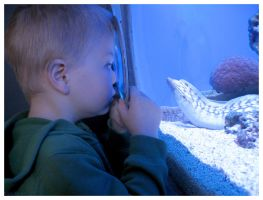 Lucas meets a Moray by kayne