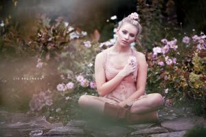 Last Summer Rose by LIZZYBPHOTOGRAPHY