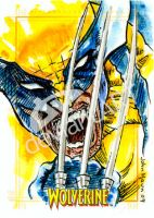 Sketch Card Wolverine Haun by JohnHaunLE