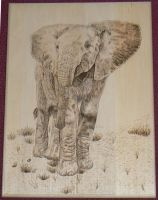 Elephant Woodburning by MontanaJohnsons
