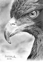 Eaglehead by Torsk1