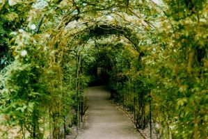 Rose arches at Warwick Castle by tilbert