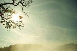 Tree And Mist by LePianiste