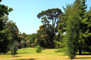 Royal Botanic Gardens, Melbourne 8 by Okavanga