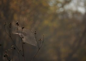 Spiderweb by Manbehindthelens