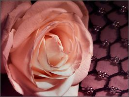 Rose Poetry Two by jezebel