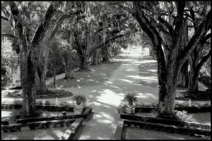 Rosedown Plantation Entrance by SalemCat