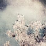 Black and white winter by ConceptualMiracles