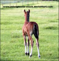 Friendly Mare Foal 3 by okbrightstar-stock