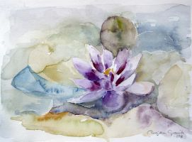 Water-Lily by Picturakonstforening
