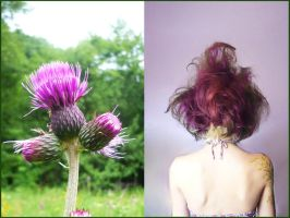 Two Thistles by E11a