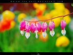 Bleeding Hearts by below-the-surf
