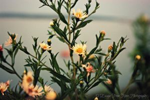 The Flowers Before the Storm by jltrafton