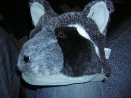 Racoon Hat by HardVector