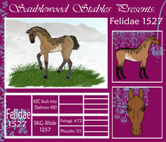 SwS Felidae 1527 by DressageRider88