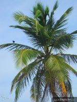 Palm Tree with Bird by cbspicer