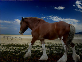 clydesdale shire by Subaru09