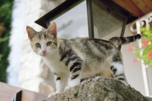 Ardeche kitten by Southparade