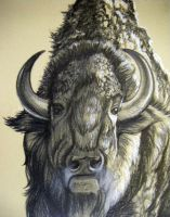 American Buffalo 2 by HouseofChabrier