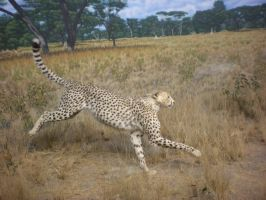 Cheetah Sprint by DrachenVarg-stock