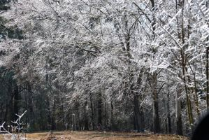 Icy Woods by rrolson