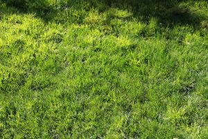 Grass 1 by Chocomix-Stock