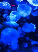 Jelly fish exit by SumFaKingGuy