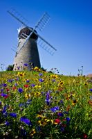 Summertime Windmill by niksi13