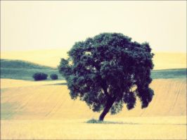 lonely tree by kriakao