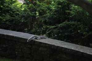 Squirrel chillin on a wall by WhyteMyst