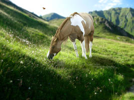 Fresh Grass by CoutureEquineDesigns