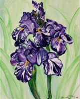Loved Irises by BrandiRu21
