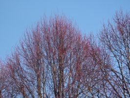 Red branches by Adagem