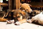 Dogpile by joebbowers
