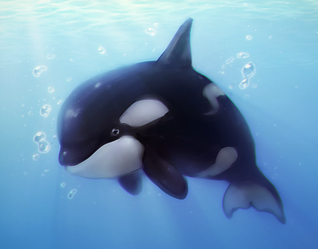 Orca by Pikishi