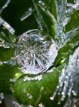 Ice Drop by iriscup