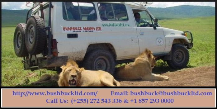 Safari Company offering the best tours in Tanzania by Bushbucksafaris