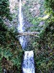 Oregon Water Fall Oil by 806designs