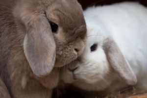 Bunny Snuggles by luthias