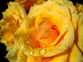 Dripping Yellow by Gunpowdersmoke