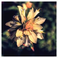 Texas Paintbrush by FasterThanChris