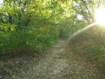 Nature Trail by Artixte