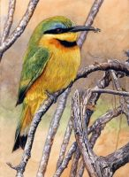 Little Bee-Eater by WillemSvdMerwe