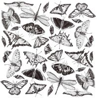 Butterfly Pattern by Xaving