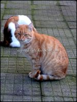 697 by evy-and-cats