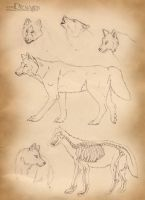 Wolf Anatomy by Dremagon
