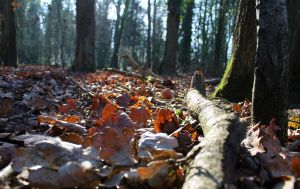 Sunlight on the forest floor II by Based-on-love