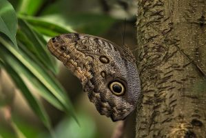 Butterfly Stock 03 by NellyGraceNG
